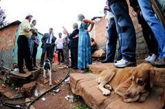 Situação de cães e gatos de rua será avaliada pela comissão
