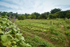 Evento deverá estimular o plantio e a pesquisa sobre plantas e ervas medicinais