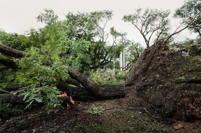 Legislativo teve muitas árvores atingidas Foto: Ederson Nunes