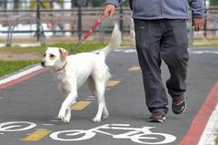 Proposta visa o bem estar de cães, entre outros animais que possam ser conduzidos ou usar coleira