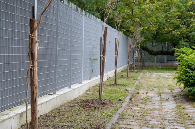 Plantio de árvores na CMPA.
