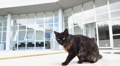 Objetivo da proposta é estimular cuidados e adoção de animais abandonados