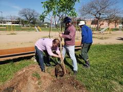 Dia da Árvore: Vereador André Carús realiza plantio no Parque Mascarenhas de Moraes