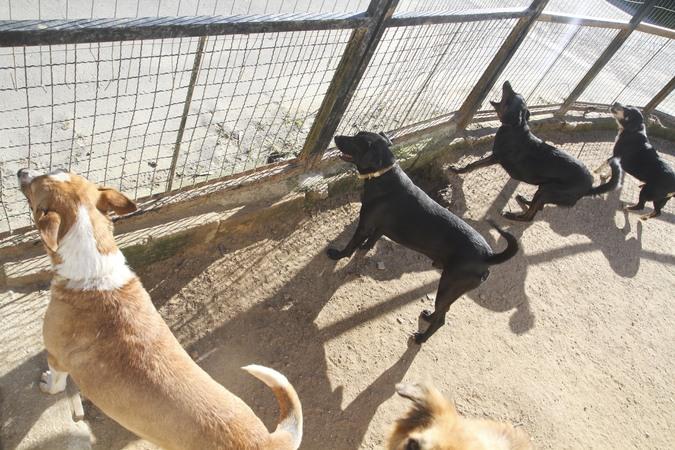 Projeto de comedouros para cães de rua