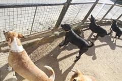Proposta beneficia entidades que abrigam animais