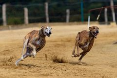 Projeto busca evitar maus-tratos aos animais