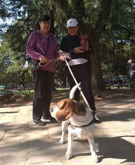 Uso de coleira e guia em cães na via pública