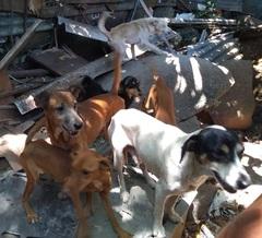 Controle populacional de animais traz benefício para a cidade.