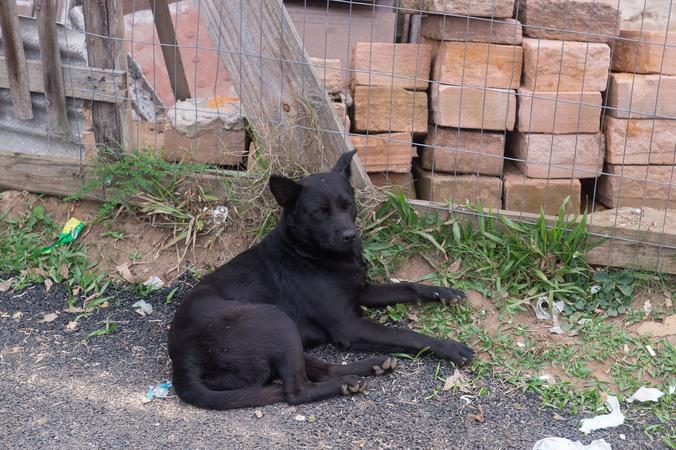 Cachorro de rua. Cão. Animal.