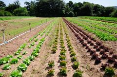 A Central de Abastecimento comercializa hortigranjeiros