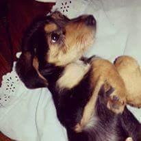 Cachorrinho morre de fome em Porto Alegre